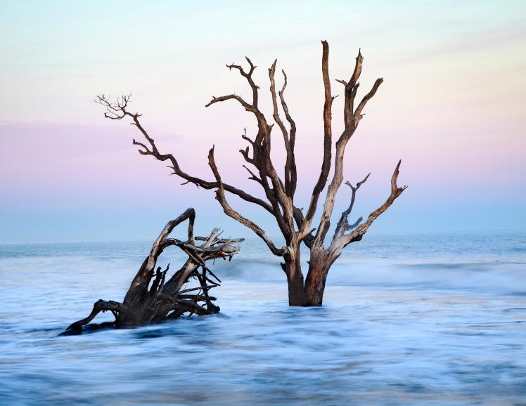 Skeleton Tree