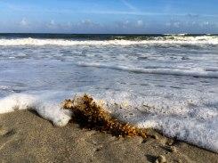 Ocracoke Beach, 2015.
