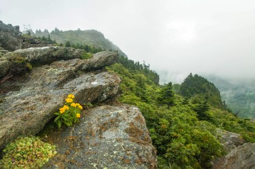 Grandfather Mountain and flowers