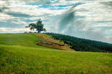 Blue Ridge Parkway Tree