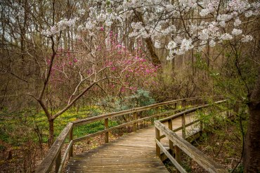 Spring at the Bog Garden in Greensboro NC. 2016