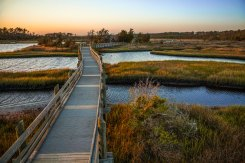 Boardwalk at the Croatan National Forest, early May 2016.