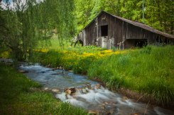 Wildflower field, flowing water, and an old barn, from Waynesville NC. Mid May 2015.