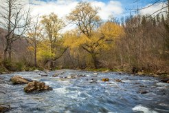 Spring colors and calm flowing water at Whitaker Branch, near Linville, NC. April 2016.