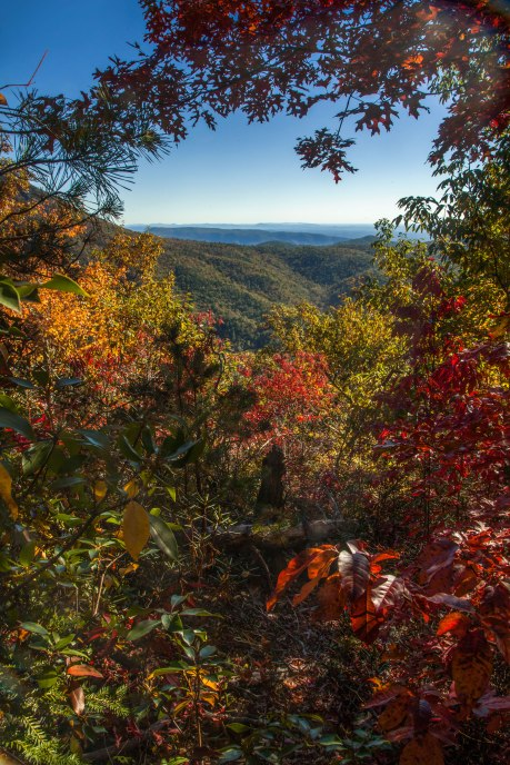 Looking out across the Blue Ridge Mountains through a heart shaped hole in the dense forest. Linville Gorge October 2016