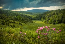 Rhododendrons and storm clouds along the Blue Ridge Parkway near Boone, NC.