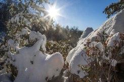 Sun and deep snow near Westfield on 1/7/17.