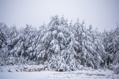 snow, nc, trees, 2017