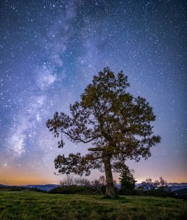 doughty park, autumn, tree, stars