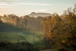 pilot mountain, North Carolina, jolo, vineyard
