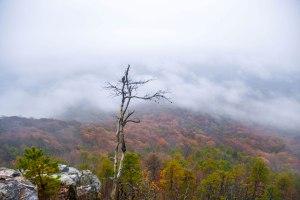 pilot mountain, nc, clouds, fog, autumn