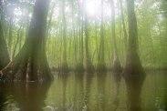 camping, kayak, paddling, platform, North Carolina