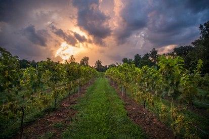 Sunset above a vineyard in North Carolina