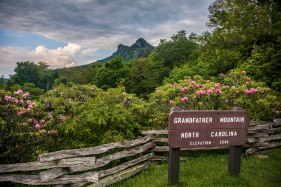 Rhododendrons, Grandfather Mountain, and a growing storm in the distance
