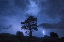 Lightning strikes behind a tree in Greensboro, North Carolina