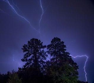 Lighting around a pair of trees in Greensboro, North Carolina