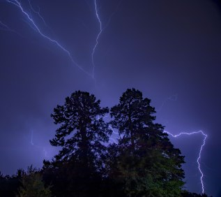 Lighting around a pair of trees in Greensboro, North Carolina